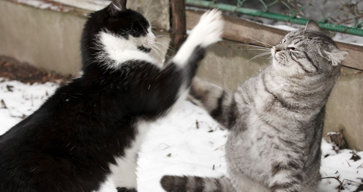 Angry And Annoyed Cats Fighting