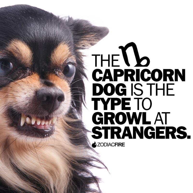 The Capricorn dog will growl at strangers
