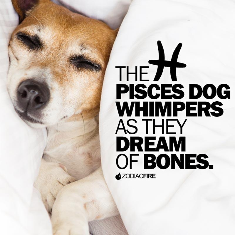 The Pisces dog dreams of bones