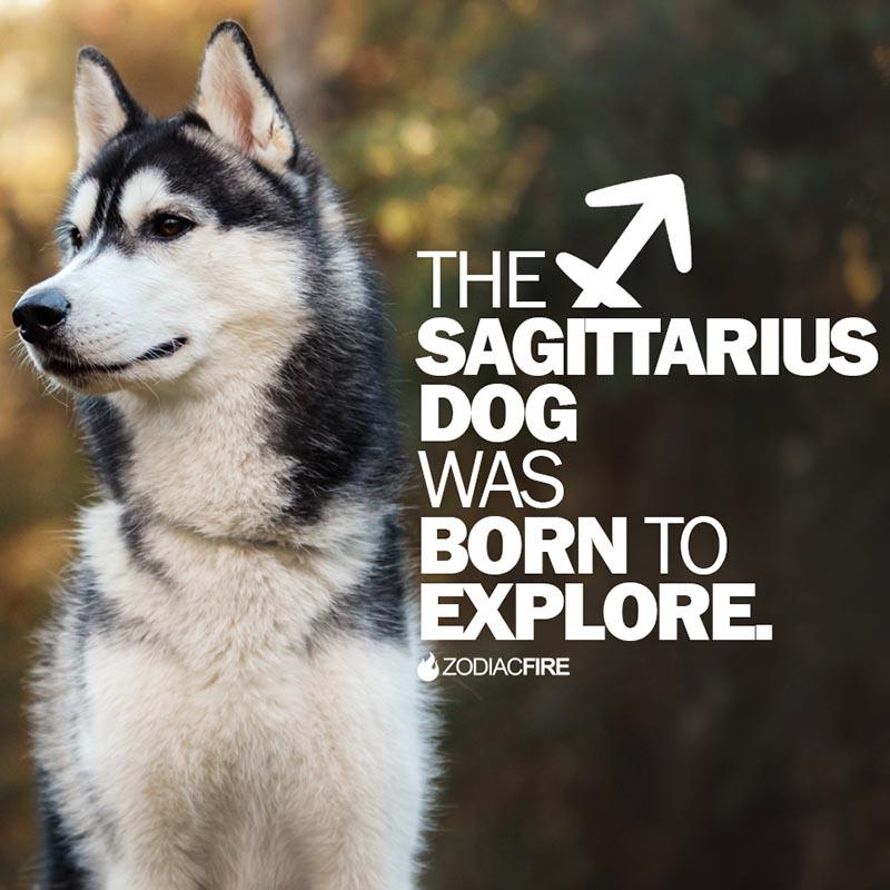 The Sagittarius dog was born to explore
